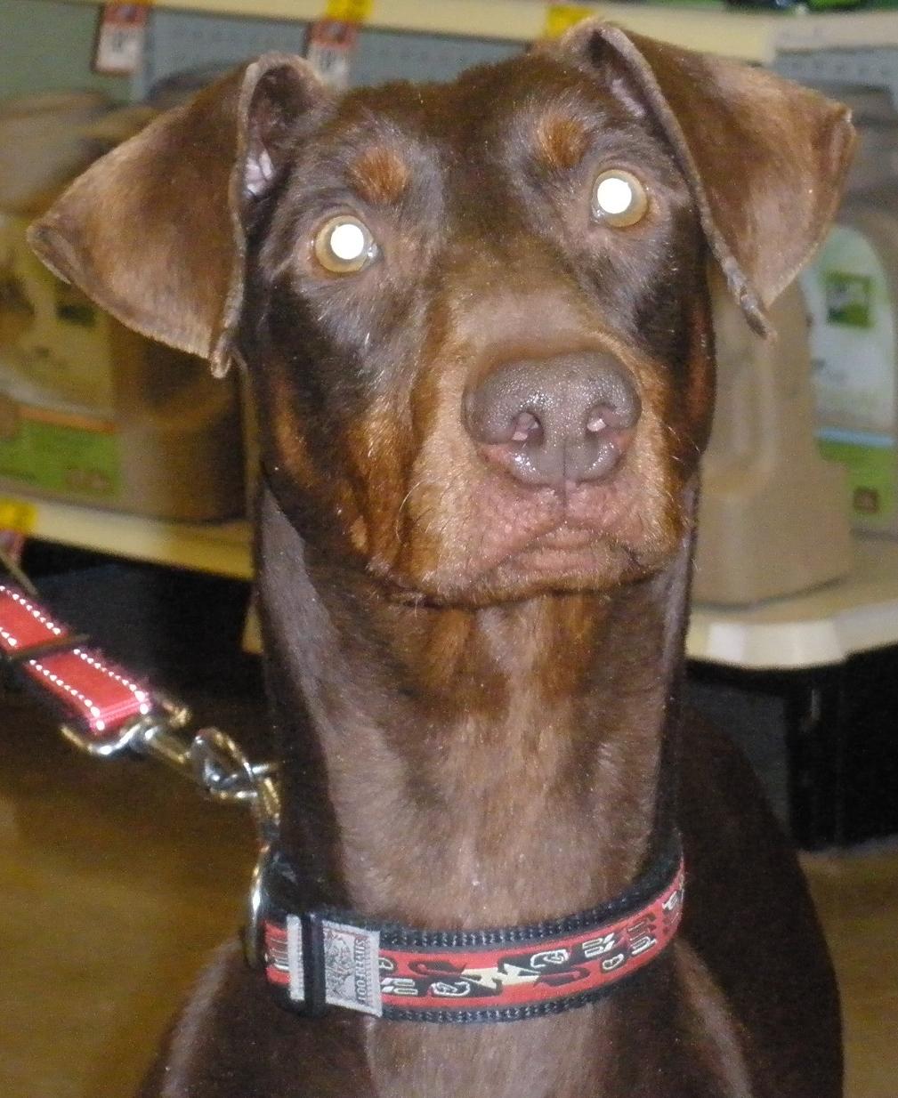 Sadie (Adoption Pending)