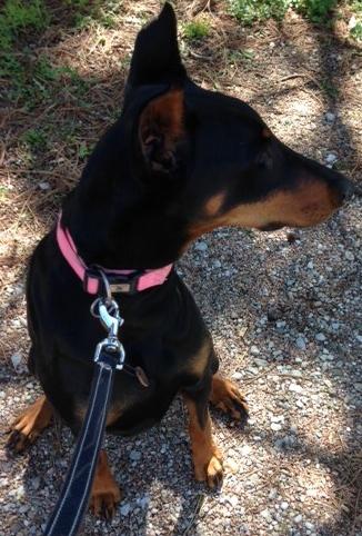 Roxie (Adoption Pending)