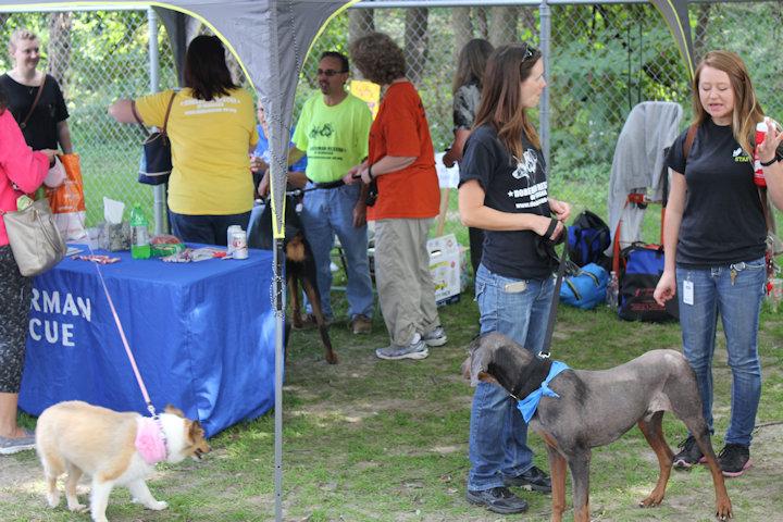 Dogs For Adoption At Nebraska Humane Society