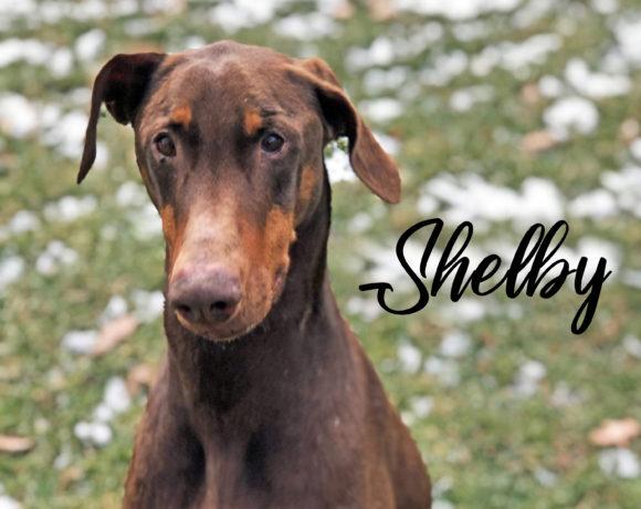 Shelbi